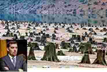 Отныне никаких «черных лесорубов»: В Закарпатье проведут масштабный аудит лесного и охотничьего хозяйства