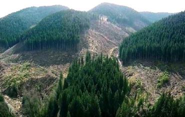 Правительство ограничило сплошные вырубки леса на склонах Карпат