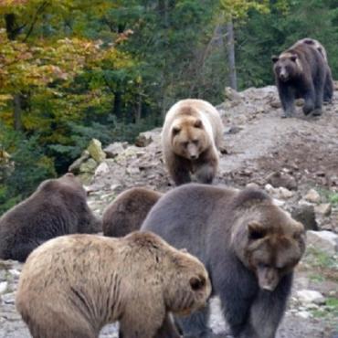 В Закарпатье на 6 гектарах начали строительство нового вольера для медведей