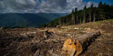 Карпатский регион в опасности из-за незаконной вырубки лесов и изменения климата
