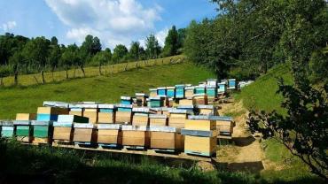 В Закарпатье, в Колочаве создадут аттракционную пасеку - пчелиный музей и проведут фестиваль меда