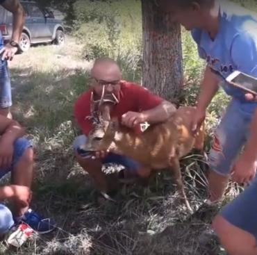 В Закарпатье сбитое животное отвезли к врачу сразу же после ДТП