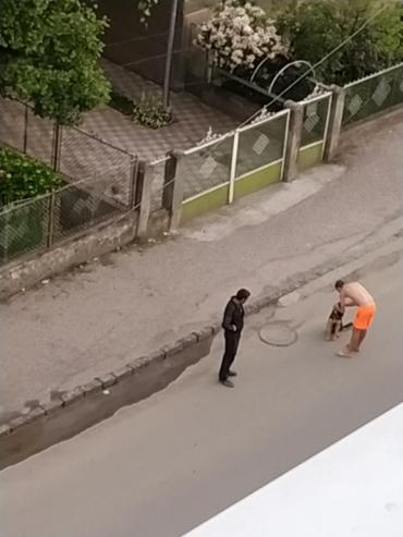 В Закарпатье утром молодая девушка стала свидетелем ужасной картины