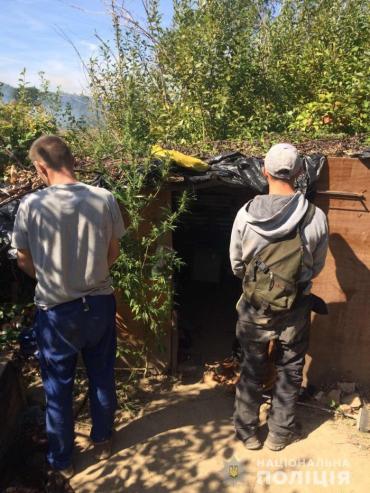 Недалеко от Мукачево копы обнаружили внушительную наркоферму