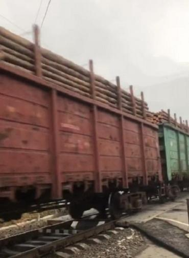 Очевидцы насчитали почти 20 вагонов с лесом: Чёрные лесорубы продолжают вывозить дерево с Буковины