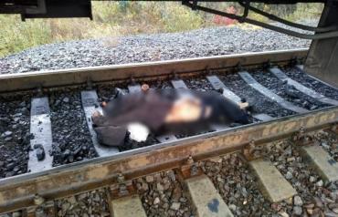 Смерть на ж/д путях: В Закарпатье поезд сбил мужчину