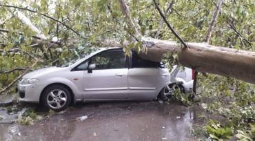 В Венгрии бушует ураган: Вырваны деревья, порваны электропровода