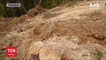 Закарпаття. Чому сотні горян пішли в ліс проти важкої техніки і бензопилок