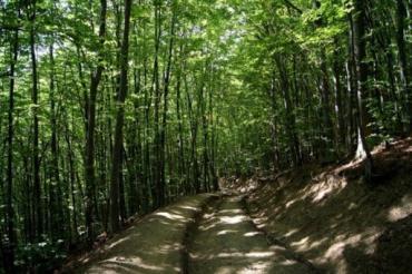 Ліси Закарпаття: оптимізація та збереження