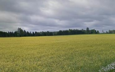 В Закарпатье прокуратура требует вернуть государству земли стоимостью почти 150 миллионов