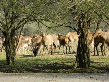 Єгері й мисливці Закарпаття — за збереження багатої фауни гірського краю