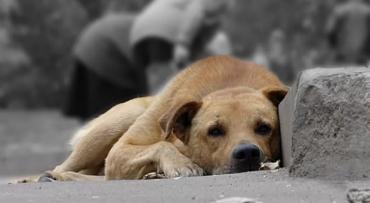 У столиці Прикарпаття невідомі труять собак.