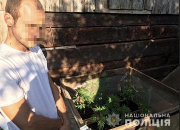 В Закарпатье полицейские выявили очередного молодого наркофермера