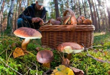 """В горах Карпатах разыскивали грибника из Галичины и таки """"нашли""""!"""