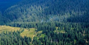 """Закарпаття. У лісі біля гори Явірник відшукали туриста, який """"загубився"""""""