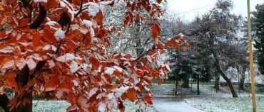 На Закарпатті похолодало та сипле сніг