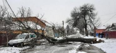 В Ужгороді дерево, що впало, могло повбивати людей