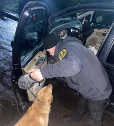 Прикордонний пес не пропустив марихуану через кордон в Ужгороді
