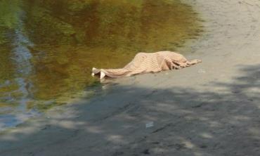 В Закарпатье из реки выловили тело мертвого местного жителя