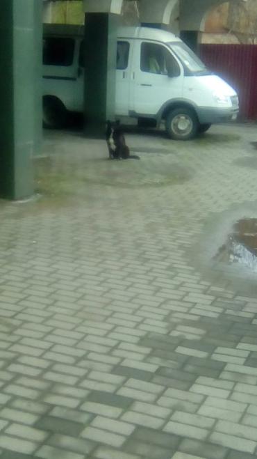 Будьте осторожны: В Ужгороде неадекватный пёс покусал маленького мальчика
