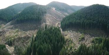 Лысые Карпаты: В Закарпатье СБУ разоблачила масштабное хищение лесов