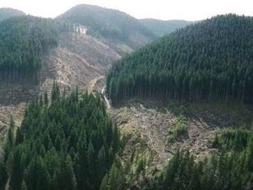 Экологическая ситуация в Карпатах: Возобновили мораторий на сплошную вырубку леса