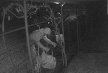 В Ужгороде воров за «работой» сняла камера видеонаблюдения: Видео опубликовали в сети