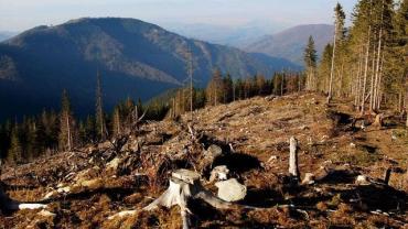 Збитки на мільйони гривень: В Закарпатті викрили схему з вирубки лісів