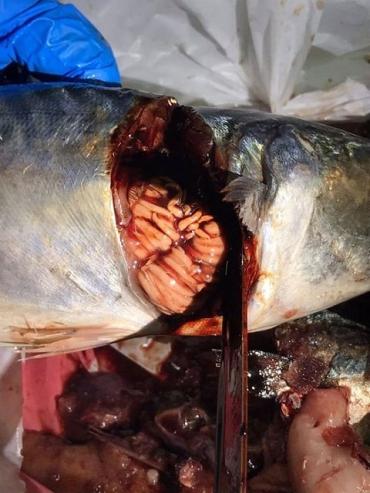 Уроды, травят народ: В Закарпатье супермаркет продает рыбу с червями, покупатели в шоке