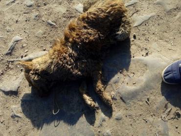 В Закарпатье люди нашли новую жертву сумасшедшего живодёра