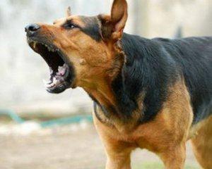 В Закарпатье стая собак напала на прохожую женщину