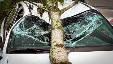 ЧП в Ужгороде: Большой кусок дерева упал на припаркованный автомобиль