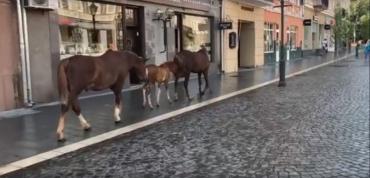 В Ужгороде на площади Петефи свободно гуляла странная группа