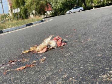 В Ужгороде по всей трассе валялась мертвечина: Вонь стоит невыносимая