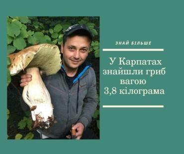 """В Карпатах """"охотник"""" наткнулся на гриб весом почти 4 кг"""