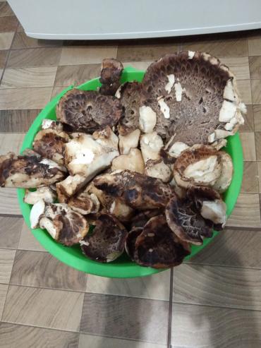 В Закарпатье начали собирать грибы, которые можно скушать только весной