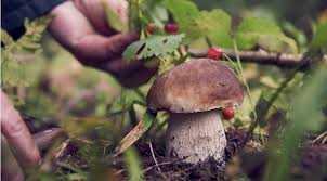 Поход за грибами закончился для двух женщин в Закарпатье приливом адреналина