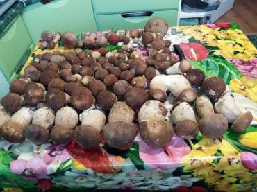 Ужгороде на рынках продают белые грибы