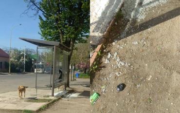В Ужгороде новенькую автобусную остановку разнесли в пух и прах
