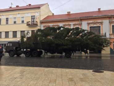 В центр Ужгорода привели самую главную красавицу месяца