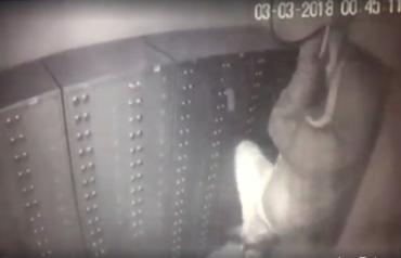 На Закарпатье правоохранители не могут найти грабителей банка