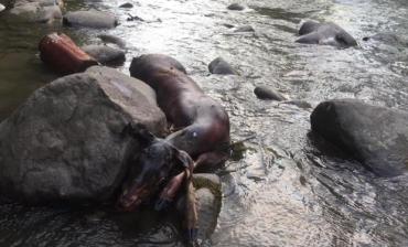 В Закарпатье браконьерам нет стопа