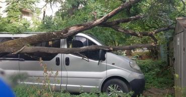 В Закарпатье хозяйка машины увидела печальную картину