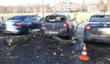ЧП в Ужгороде: Огромная ветка рухнула на три автомобиля