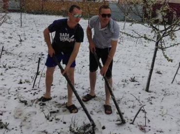 Курьез дня: Как в Закарпатье картошку копают в конце апреля