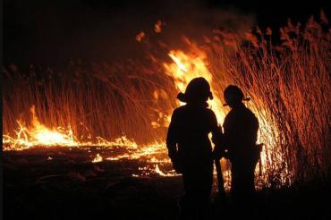 В Закарпатье огонь уничтожил насаждения грецкого ореха на 2,5 тыс. евро
