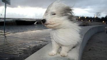 В Закарпатье ожидают прихода мощнейшего ветра