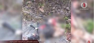 Бьют тревогу: Кто жестоко убивает животных в Закарпатье