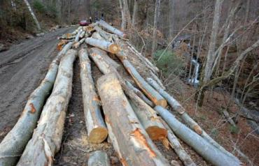 В Лумшорах рубят лес, потому что он там уже никому не нужен!