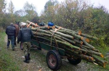 В закарпатском лесу задержали повозку с дровами, - контрабанда ?